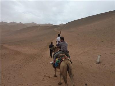 砂漠らしき山を登ってゆく